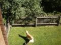 jimmy-sieht-eine-katze-im-apfelbaum